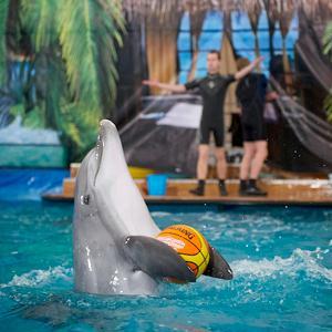 Дельфинарии, океанариумы Химок