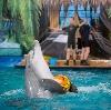 Дельфинарии, океанариумы в Химках